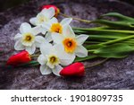 White Daffodil And Red Tulip...