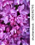 beautiful lilac flowers... | Shutterstock . vector #190190795