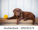 labrador retriever puppy | Shutterstock . vector #190192175
