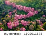 Aerial View Of Pink Cherry...