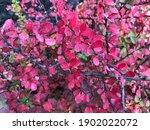 Macro Photo Violet Flowers....