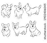 Cute  Corgi Dog  Doodle....