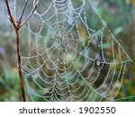web in the morning | Shutterstock . vector #1902550