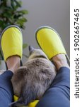 Small photo of Yellow slippers on women's legs and cat in bed. Concept of hygge, comfortable home slipper, home still life, cozy lifestyle, relaxing. Cat near home slipper. Yellow and gray