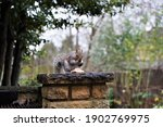 Wonderful Grey Squirrel...