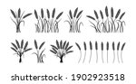 wheat ears cartoon black... | Shutterstock .eps vector #1902923518