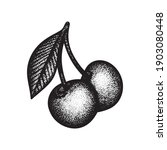 cherries engraving style vector ...   Shutterstock .eps vector #1903080448