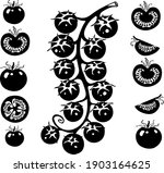 vector drawing cherry tomatoes  ... | Shutterstock .eps vector #1903164625