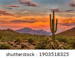 Sunset in the sonoran desert...