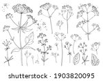 flowers vector line drawing.... | Shutterstock .eps vector #1903820095