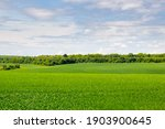 Summer Landscape With Hilly...