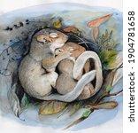 Mice Sleep In A Nest  ...
