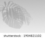 shadow plant leaf overlay...   Shutterstock .eps vector #1904821102