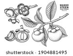set of mangosteen fruit hand... | Shutterstock .eps vector #1904881495