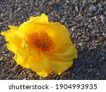 Yellow Flower On Ground  Cotton ...