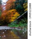 Bright Beautiful Autumn Bubbles ...