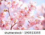 japanese cherry blossoms | Shutterstock . vector #190513355