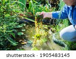 Woman Is Cleaning Garden Pond...