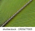 Close Up Of A Green Bird...