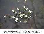 Snowdrops Spring Flowers In...