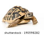 Stock photo turtle in front of white background 190598282