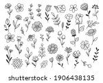 hand drawn flower and branches... | Shutterstock . vector #1906438135