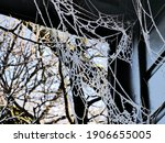 Frozen White Cobweb On Wooden...