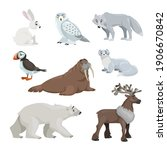 cartoon polar and arctic... | Shutterstock .eps vector #1906670842