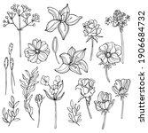 hand drawn garden flowers....   Shutterstock .eps vector #1906684732