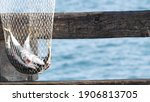 Saltwater Angling  Wooden Pier...