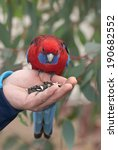 Crimson Rosella  Platycercus...