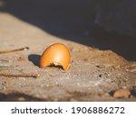 Broken Eggshell On The Ground