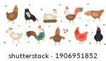 chicken vector cartoon chick... | Shutterstock .eps vector #1906951852