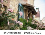 Gerberoy And Pink Roses. Old...