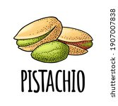 pistachio nut with and without... | Shutterstock .eps vector #1907007838