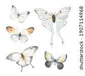 set of flying butterflies ... | Shutterstock . vector #1907114968