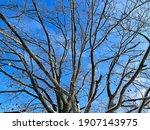 Tree Barren On Leaves In Winter ...