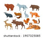 woodland forest animals. cute... | Shutterstock .eps vector #1907325085