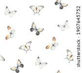 flying butterflies on white... | Shutterstock . vector #1907645752