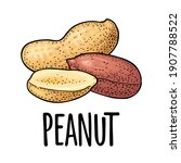 whole and half peanut seed with ... | Shutterstock .eps vector #1907788522