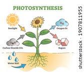 Photosynthesis Diagram Process...
