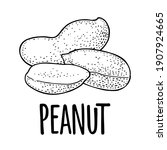whole and half peanut seed with ... | Shutterstock .eps vector #1907924665