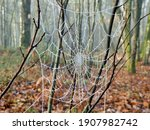 Close Up Of A Frozen Cobweb...