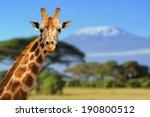 Giraffe In Front Of Kilimanjaro ...