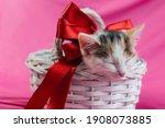 Cute Tricolor Kitten Sleeps In...