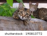 Stock photo  funny kitten curious kitten 190813772