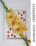 Gladiolus  Yellow Gladiolus ...