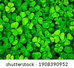 Background with green clover...