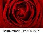 Red Rose Petals With Rain Drops ...