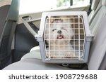 Small photo of Small dog maltese sitting safe in the car on the back seat in a safety crate
